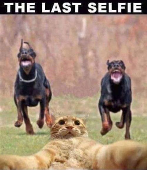Hình ảnh hài hước